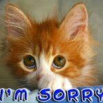 Breinbrouwsels zegt sorry